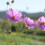 秋の胃の不調  9月以降に発症する「秋バテ」の原因と解消方法